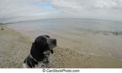 Dog on the beach catching a piece of food, slow motion