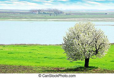 spring scene with farm - spring scene with old farm in the...