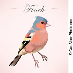 Illustration of finch - Vector illustration of beautiful...