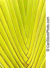 Green palm tree leaf background - Yellow and green tropical...