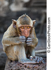 Small cute monkey sitting and eating
