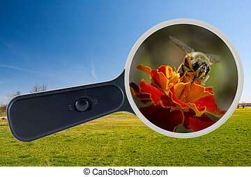 bee and yellow flower under the magnifying glass, clipping path