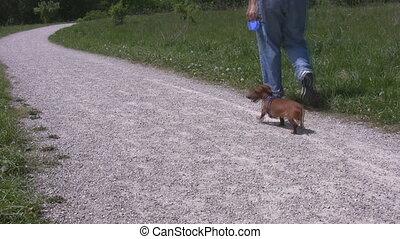 Man walking miniature Dachshund