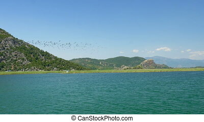 """flock of birds flying over reeds, dalyan backwater, turkey"""