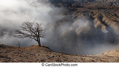 Lone tree on the edge of a ravine in the fog - Badland. Lone...