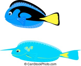 Fish blue unicorn tangs - fish blue unicorn tangs, two,...