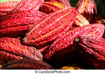 Cocoa pods in Peru - A detail photo of collected cocoa pods...