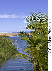 Estuary with palm trees by the Pacific Ocean - Estuary with...
