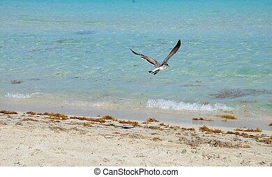 Sea Gull and sea