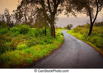 Road on Woods - Landscape of mountain path with trees and...