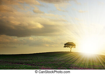 Tree Silhouette - Rural landscape with silhouette of a...