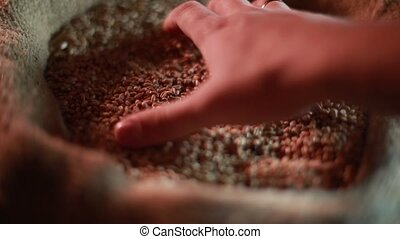 Strong man's hand takes a lot of wheat grains from a sack HD...