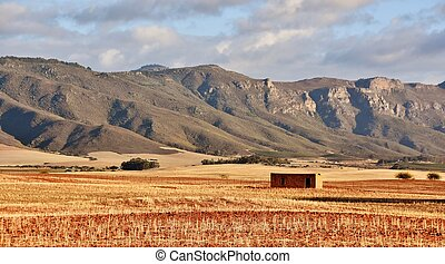 dry farm land - Rural Landscape with dry farm land and...