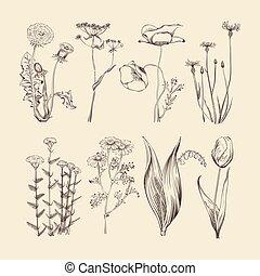 Wildflowers, herbs and flowers. Spring or summer botanical...