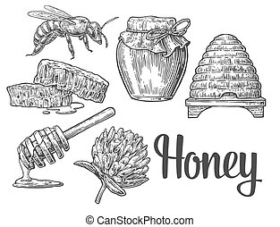 Honey set. Jars of honey, bee, hive, clover, honeycomb. -...
