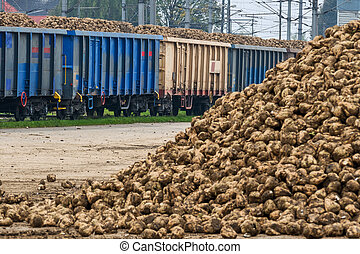 beet and freight train, a symbol of harvest, logistics,...