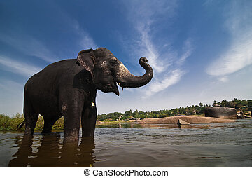 Indian elephant - Beautiful Indian elephant is standing in...