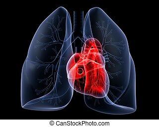 pulmão, Coração