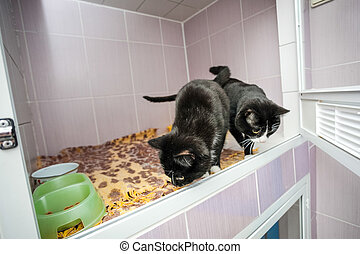 Black and white kittens in an animal shelter, smelling...