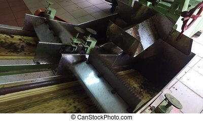 tea raw moving on machine conveyor at factory - agriculture,...