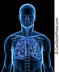 detailed lung - 3d rendered illustration of a transparent...