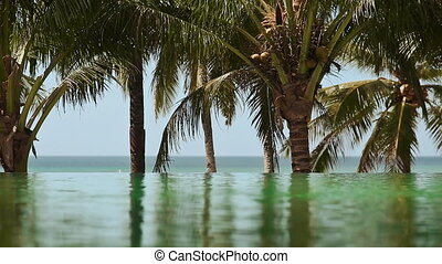 The view from the outdoor pool at the ocean with palm trees.