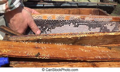 The beekeeper inserts frame. Working in his apiary