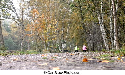 Couple ride bicycles in birch grove - Low angle rear view of...