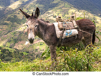 Donkey Is A Domesticated Member Of The Horse Family - Donkey...