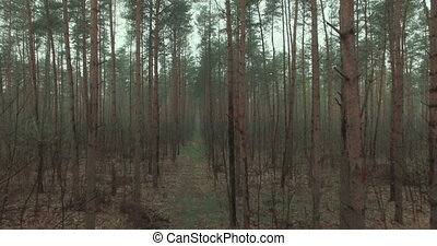 background of the forest - forest via drone view background