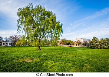 Weeping willow tree at Baker Park, in Frederick, Maryland