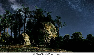 TIme Lapse of Stars and Silhouetted Pine Trees