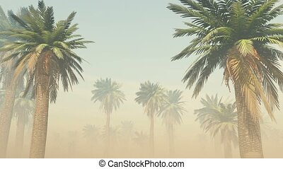 tropical palm jungle with sun rays and thick morning fog