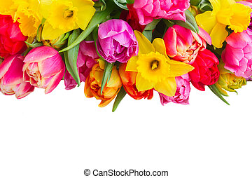 bouquet of tulips and daffodils - pink, purple and red...