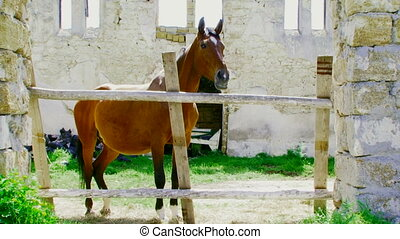 Stallion in the stalls - Beautiful stallion standing in...