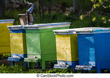 Bee hives on spring garden with blooming fruit trees with...