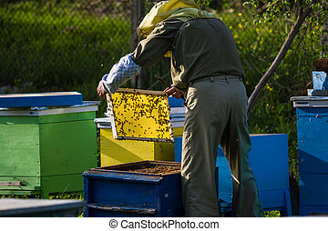 Beekeeper working on bee hive with honeycomb with bees