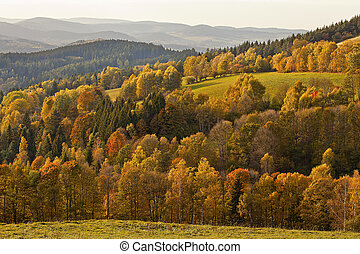 Sumava, forest, Czech Republic