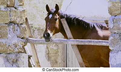 The horse stands in a shelter - Beautiful stallion stands in...