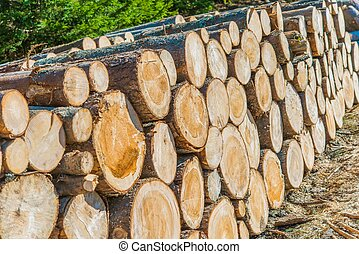 Lumber Industry Logging and Wood Storage Concept Photo.
