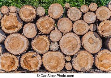 Timber Lumber Industry. Fresh Wood Logs Awaiting...