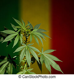 Marijuana plant on rastafarian flag background - Cannabis...