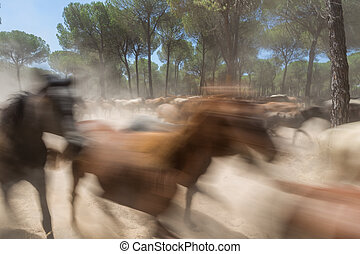 Spanish horses in El Rocio. Blurred images in motion.
