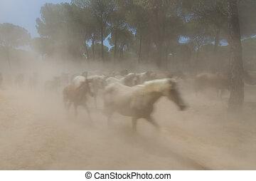 Spanish horses in El Rocio the dust mist. - Spanish horses...