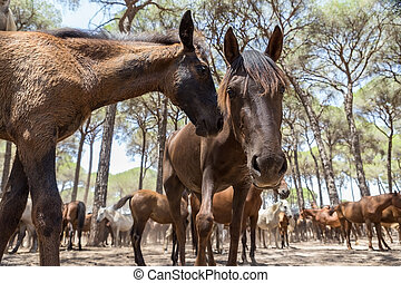 Horses in the corral interact after a walk. Spain.