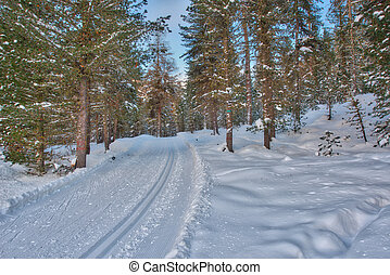 Cross-country track - Cross-country skiing in the woods