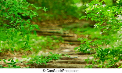 Overgrown forest trail - Forest path overgrown with wild...