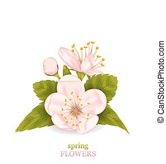 Cherry Blossom with Leaves Isolated on White Background
