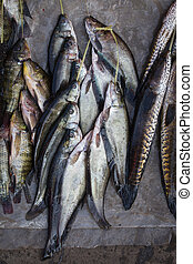 Catch fish in market, close up - The catch of fish in the...