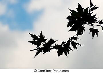 Leaves in silhouette in autumn